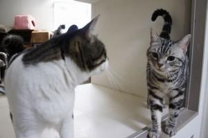 猫の謙三君とチータちゃん