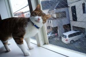 猫のキラちゃん