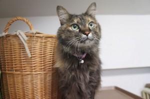 猫のモンプチちゃん