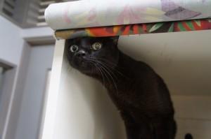 黒猫にゃん太君