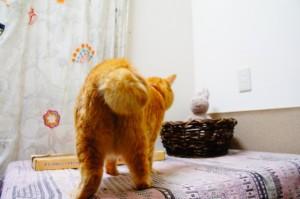 猫のニャッチ