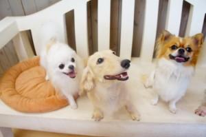 犬のお預かり3匹ちゃん