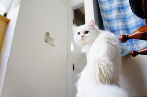 猫のアイリスちゃん1