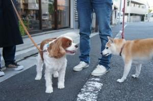 犬のフレンちゃんとサーシャちゃん