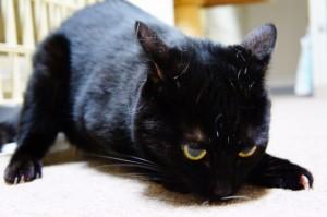 黒猫フクちゃん
