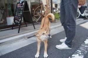 犬のアイスちゃん