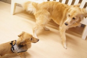 犬のイサク君とチーズちゃん