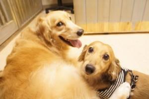 犬のチーズ君とイサク君