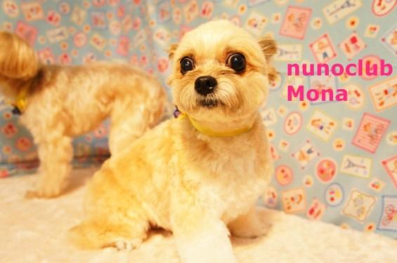 ミックス犬のトリミング写真