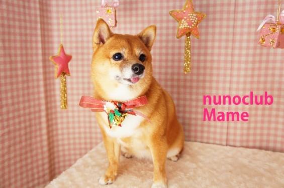 柴犬のトリミング写真