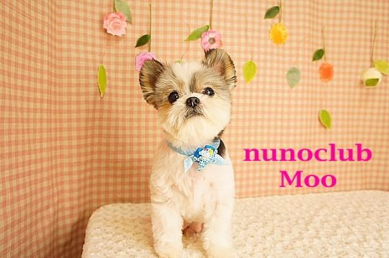 nunoclub.com ペットサロン ヌーノクラブ