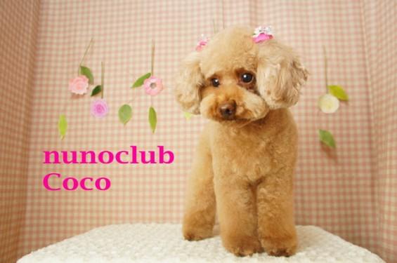 nunoclub.com トリミングサロンヌーノクラブ