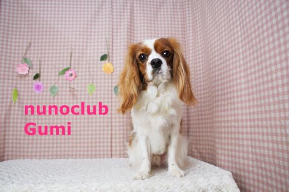 ヌーノクラブ ペットサロン・トリミングサロン・カット・シャンプー 東京都内中野区
