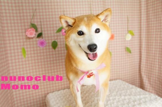 nunoclub.com トリミングサロン ヌーノクラブ