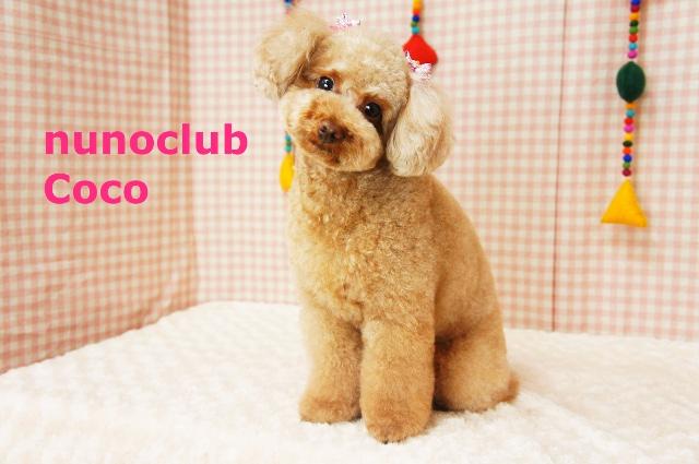 ヌーノクラブ ペットサロン・トリミングサロン・ドッグサロン・カット・シャンプー 東京都内中野区