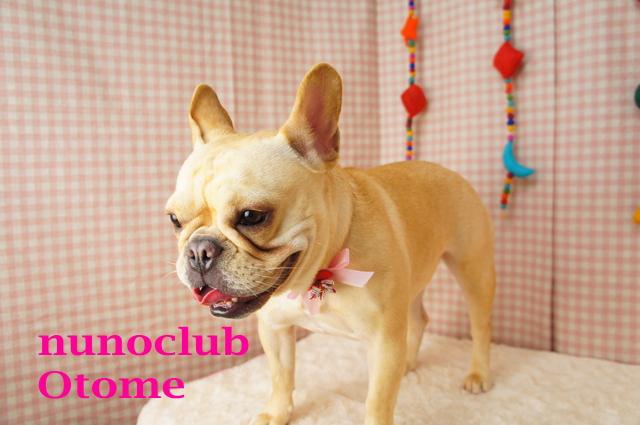 nunoclub.com トリミングサロン東京ヌーノクラブ