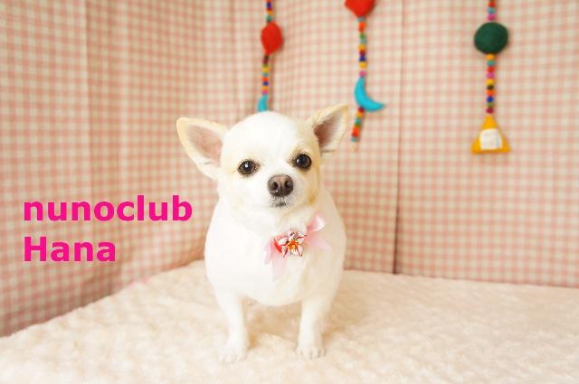 nunoclub.com ペットサロン東京ヌーノクラブ