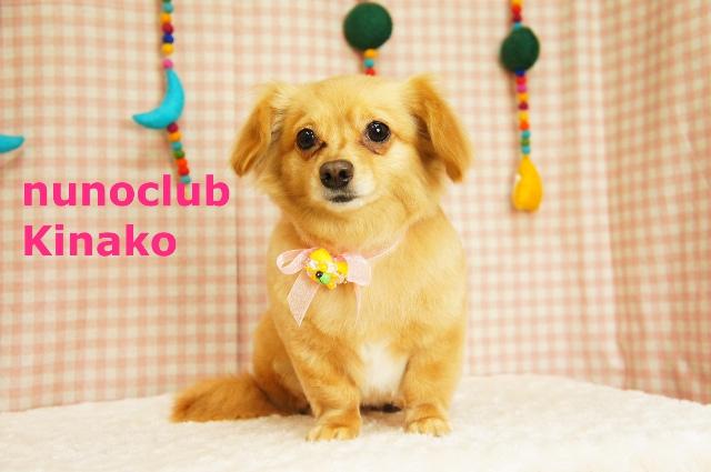 ヌーノクラブ ペットサロン・トリミングサロン・ドッグサロン・シャンプー・カット 東京都内中野区