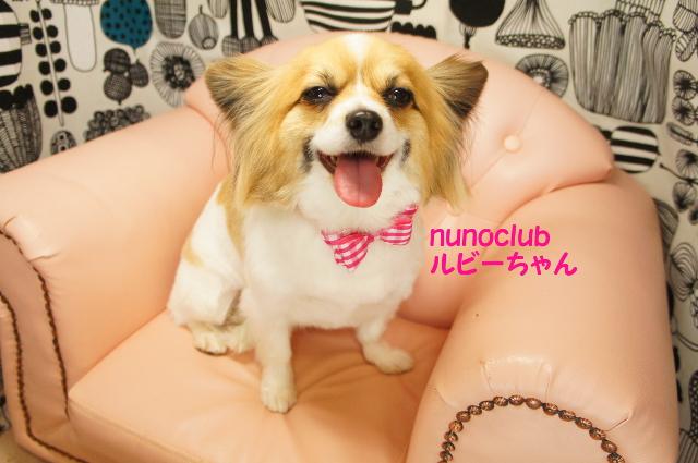 ヌーノクラブ ペットサロン・トリミングサロン・ドッグサロン・シャンプー・カット 東京都内中野区 料金 安い 人気