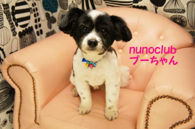 ヌーノクラブ ペットサロン・トリミングサロン・ドッグサロン・シャンプー・カット 東京都内中野区 料金 安い 格安