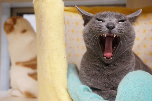 猫専用ペットホテル「ねこままホテル」 | 東京・世 …