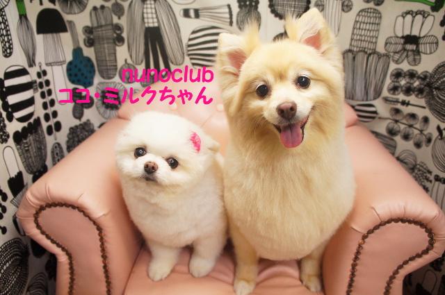 ヌーノクラブ ペットサロン・トリミングサロン・ドッグサロン・シャンプー・カット 東京都内中野区 料金 安い 評判