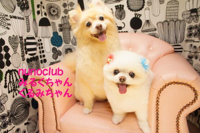 ヌーノクラブ ペットサロン・トリミングサロン・ポメラニアンのカット 東京都内中野区 料金 安い 安心