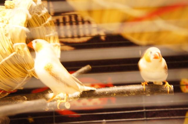 ペットホテル,中野区,新宿区,ペットホテル料金,ホテル,東京,鳥,キンカチョウ,ヌーノクラブ,評判,人気