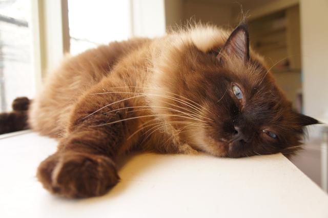 ペットホテル猫,中野区,新宿区,ペットホテル料金,ケージフリー,フリースペース,猫専用ホテル,東京,猫,日本猫,ヌーノクラブ,評判,人気