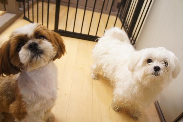 ヌーノクラブ,東京都内,中野近辺のペットホテル,犬の預かり,ケージレス