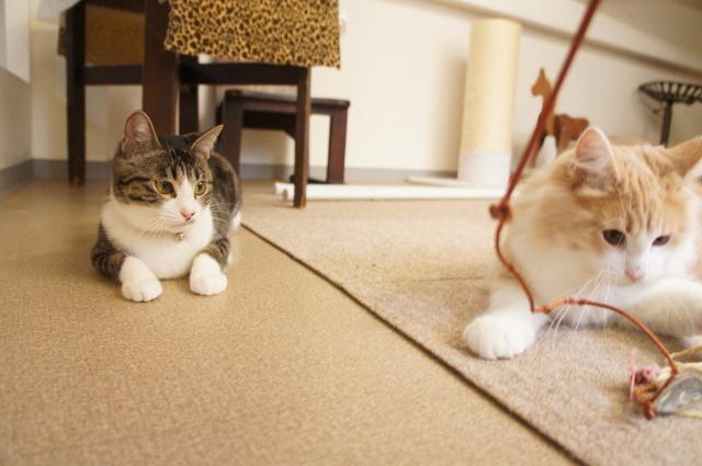 ペットホテル猫,中野区,新宿区,ペットホテル料金,猫専用ホテル,東京,猫,ヌーノクラブ,評判,人気