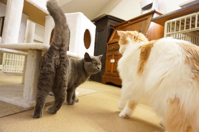 ヌーノクラブ新井薬師 猫専門のペットホテル プーキー