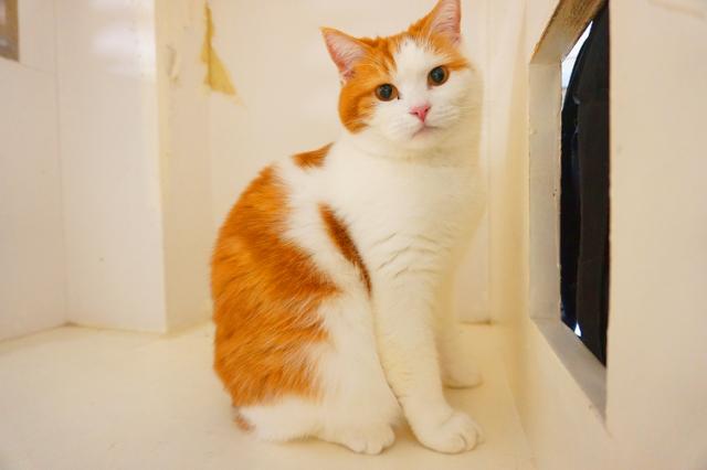 ヌーノクラブ新井薬師 猫のホテル ミックス猫のうにゃーん