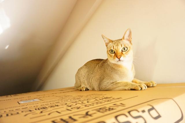 ヌーノクラブ新井薬師 猫のホテル シンガプーラの太郎