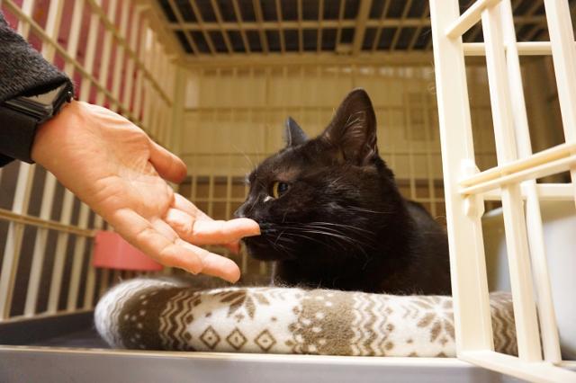 ヌーノクラブ新井薬師 黒猫のリョーマ
