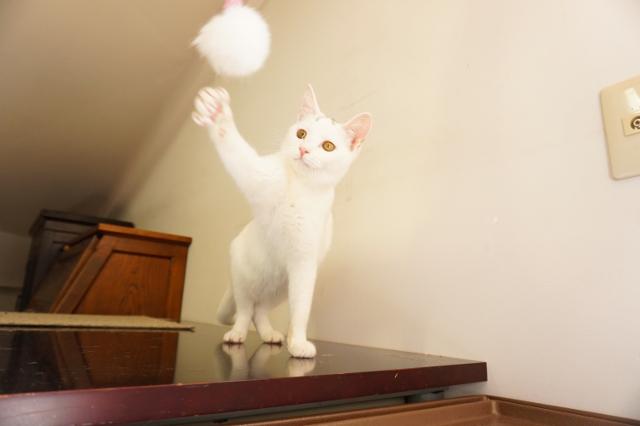 ヌーノクラブ新井薬師 白猫のゆず