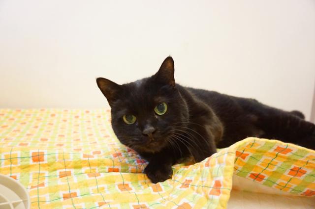ヌーノクラブ新井薬師 猫のホテル 黒猫のタンゴ