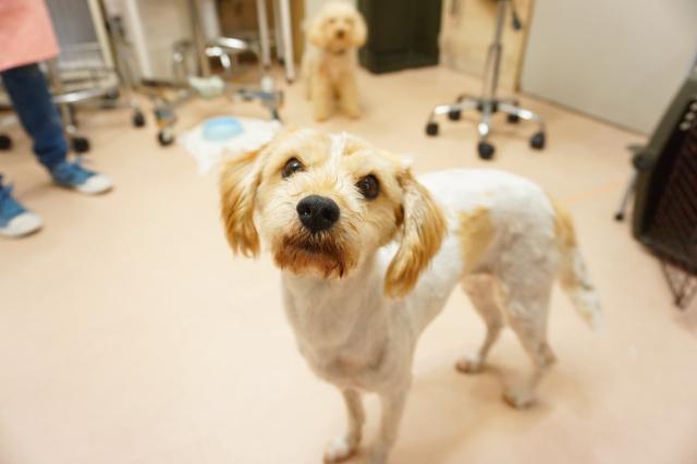 ヌーノクラブ ペットホテル 犬専用 ミックス犬のなぎ