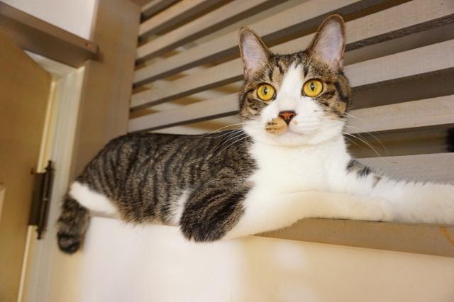 ヌーノクラブの猫お預かり