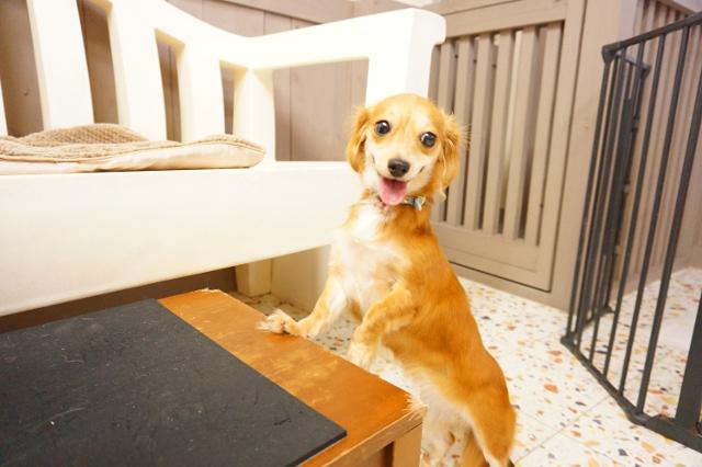 ヌーノクラブ新井薬師 ペットホテル 犬専用ホテル MIXのベル