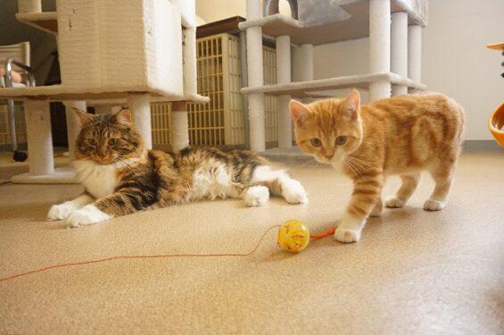 猫専門ペットホテル ヌーノクラブ