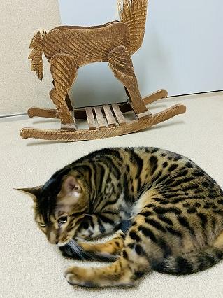 ペットホテル猫専門 ヌーノクラブ