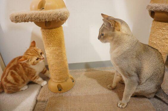 猫専門ペットホテルヌーノクラブ