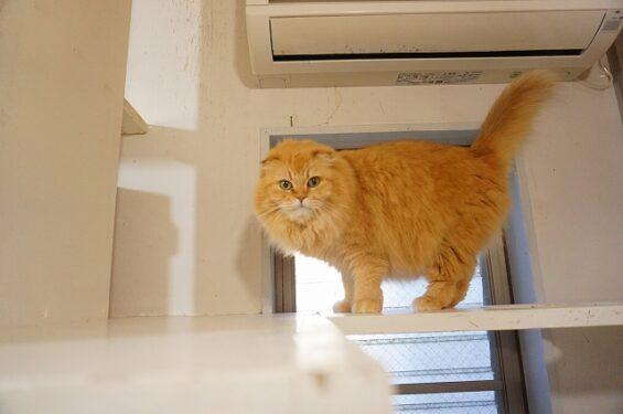 猫専門ペットホテルのヌーノクラブ
