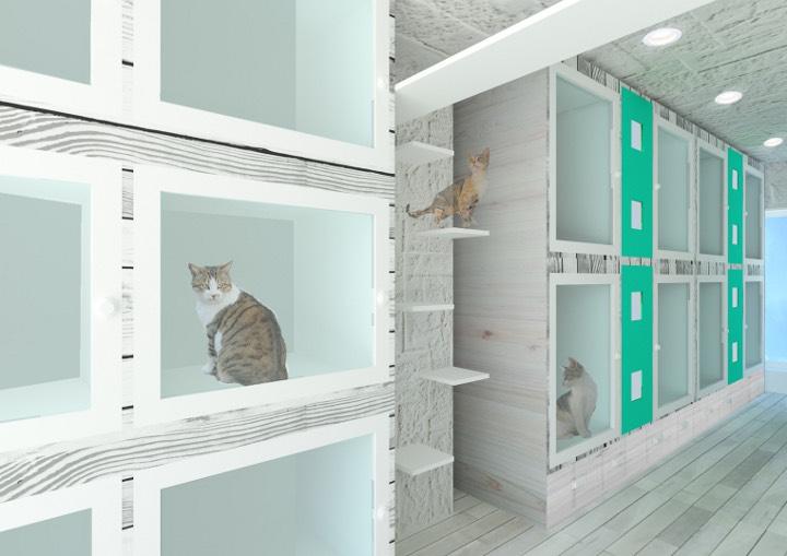 猫専用ペットホテルのヌーノクラブ高円寺店が新規オープンします!