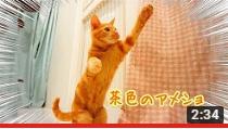 ヌーノクラブ高円寺 VIPルームに滞在中の猫ちゃんのYoutube動画