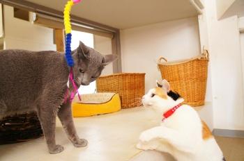 猫のペットホテルの様子