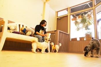 犬のペットホテルの様子